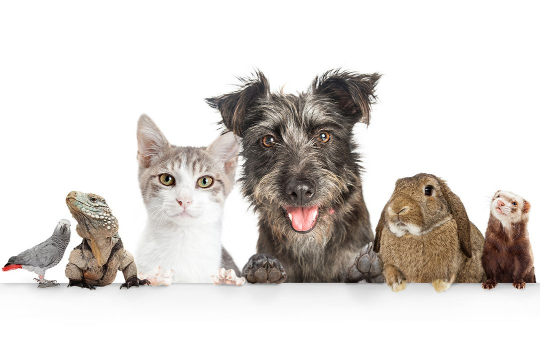 Arranging for Pet Care during Addiction Treatment