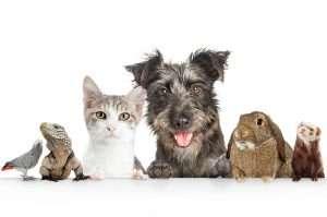 Pet Care during Addiction treatment