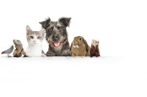 Addiction Treatment with pets