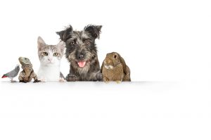 Pet Care while you seek addiction treatment
